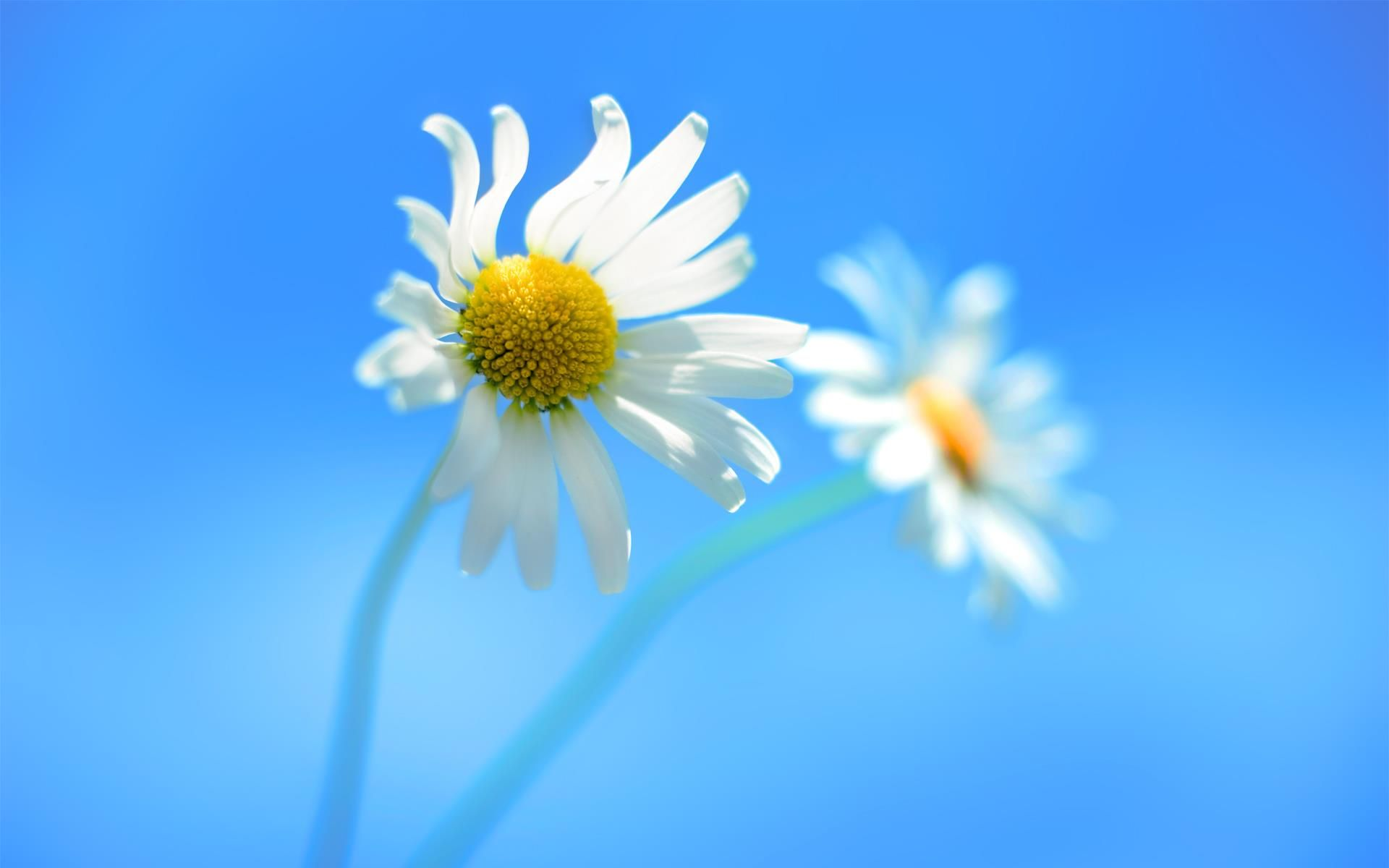 Permalink to Windows 8 Wallpaper Hd 1080p Flower