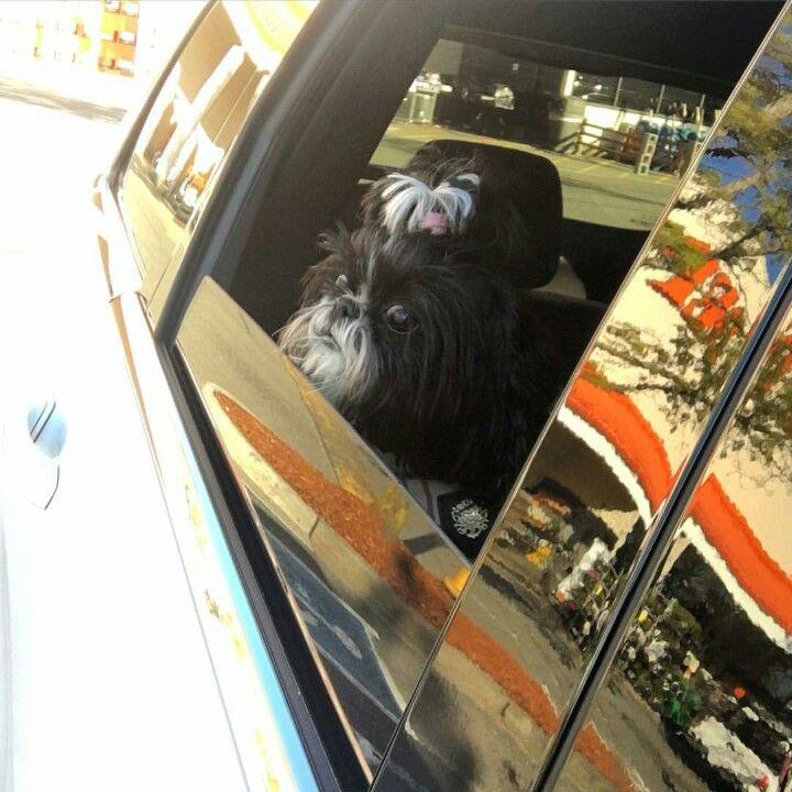 I ♡ Car rides 🐶🏎