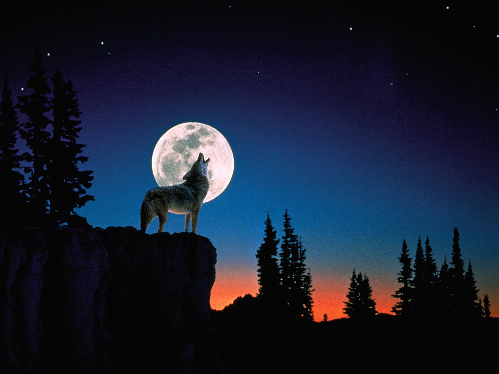 Iphone wallpaper tumblr wolf - Wolf Howling Full Moon Desktop Wallpaper
