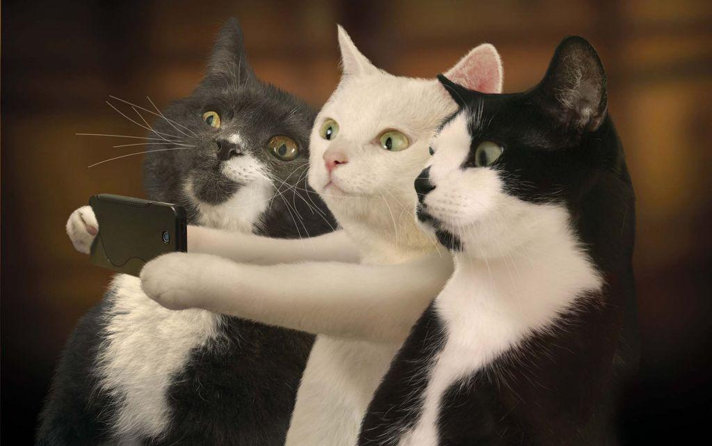 Wallpapers Cute Cat Photos Free Cat Funny Cat Wallpaper Cute Cats Photos Cute Cat Wallpaper