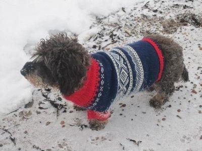 Ny Marius genser til hund | FINN.no