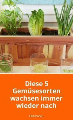 Diese 5 Gemüsesorten wachsen immer wieder nach – Gartentips