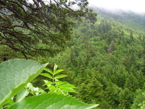 El Parque nacional de Llogara se situa en el sudeste de Albania y forma parte del municipio de Orikum, a una distancia de 40 km de la ciudad de Vlora. La altura es variable: desde 470m hasta el ...