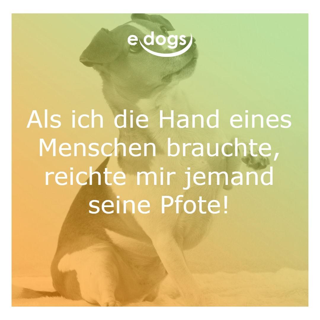 Als Ich Die Hand Eines Menschen Brauchte Reichte Mir Jemand Seine Pfote Zitatbilder Hundespruche Edogs Traumh Hund Zu Verkaufen Hundespruche Hund Zitat