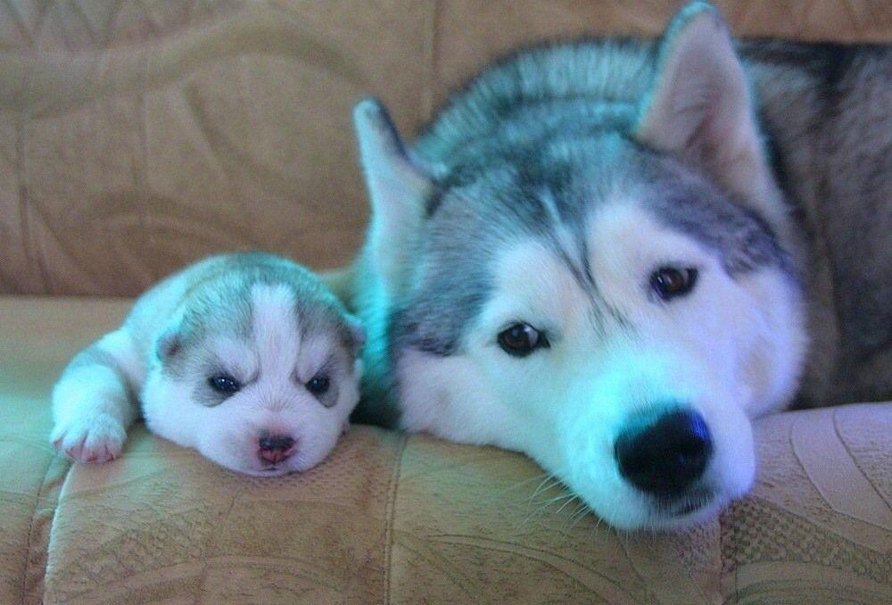 Canlar Hayvanlar Dunyasi Pinterest Perros Perro Gato And