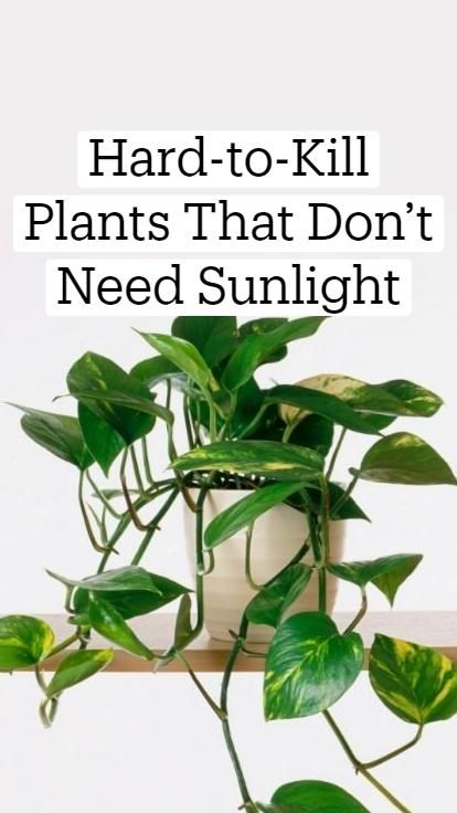 Save the world with houseplants