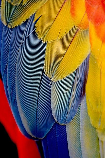 Bold colors - Feathers
