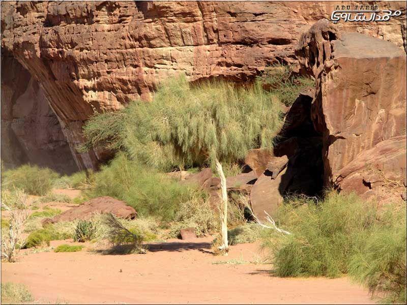 وادي ضـــم أشهر وأخطر أودية حسمى في منطقة تبوك تقرير محمد الشاوي منتديات مكشات Desert Travel Trip Animals