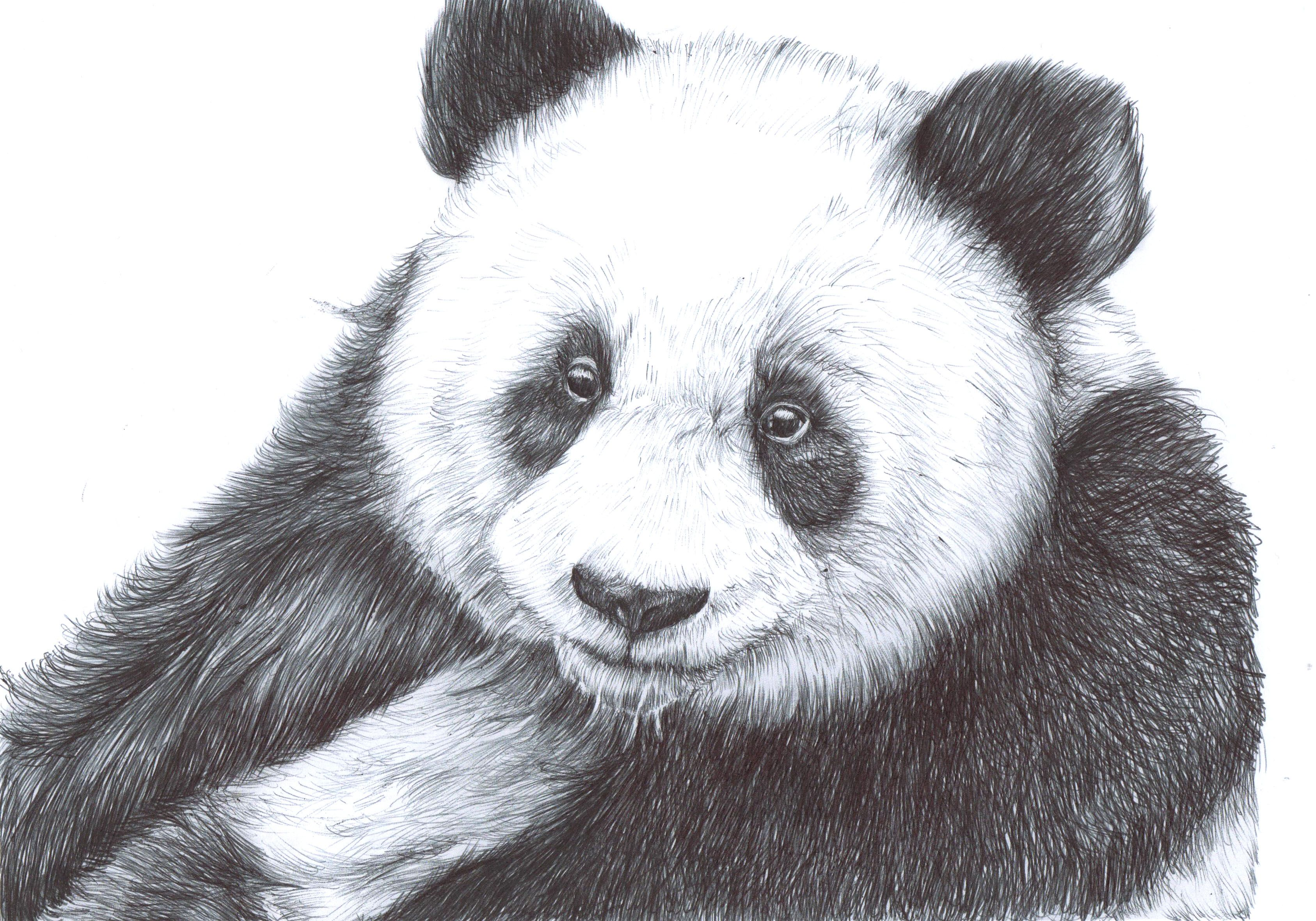 12++ Black and white animal drawings ideas