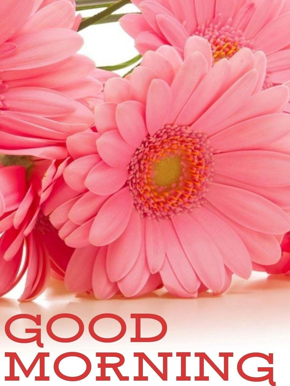 Good Morning, Happy Thursday 😊 Good morning flowers