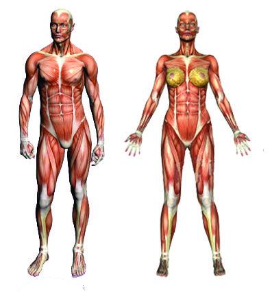 slăbind brațele musculare