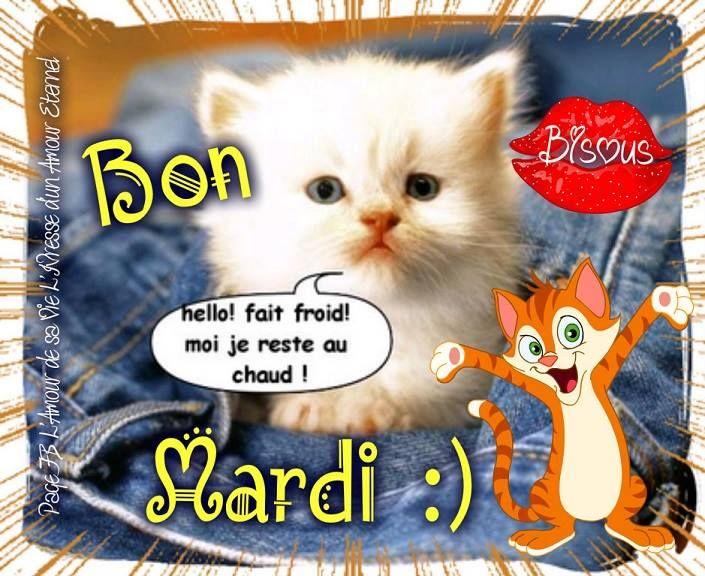 Bon Mardi Hello Fait Froid Moi Je Reste Au Chaud