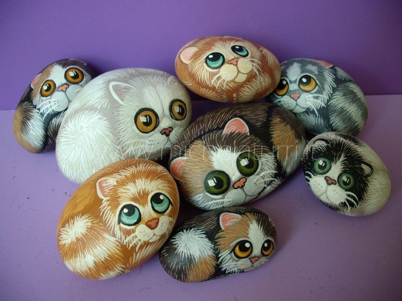 Kittens these are adorable such talent pebbles for Sassi per fioriere