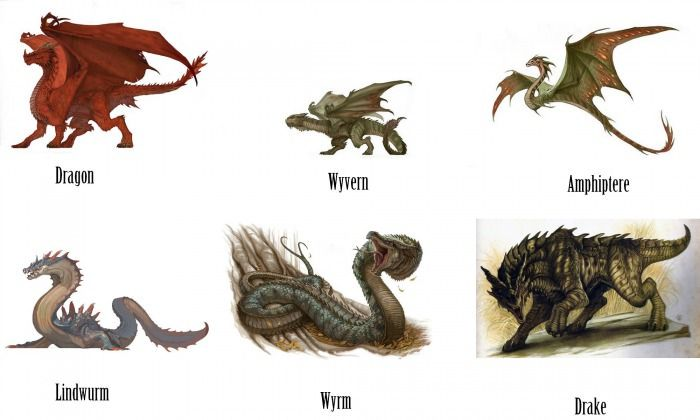a description of the different types of dragons Dragon types explores the different styles of dragons from wurms to amphipteres dragon species contains more about particular kinds or breeds of dragons.