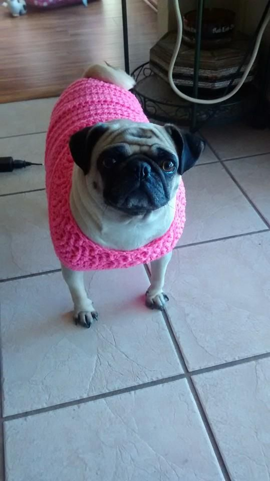 Sweater For Pug : sweater, Modified, Crocheted, Sweater, Slightly, Overweight, Pattern, Http://…, Sweaters,, Trends,, Sewing, Patterns
