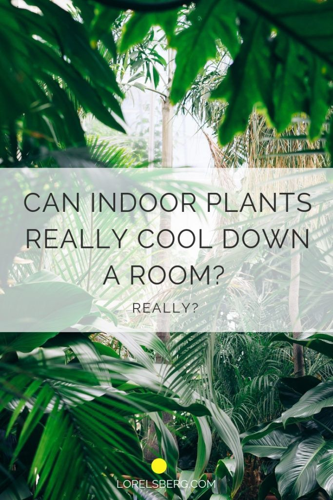 Can indoor plants really cool a room? Like for real