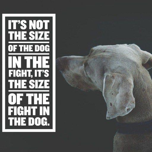 Its Not The Size Of The Dog Inspiration Motivation Pinterest