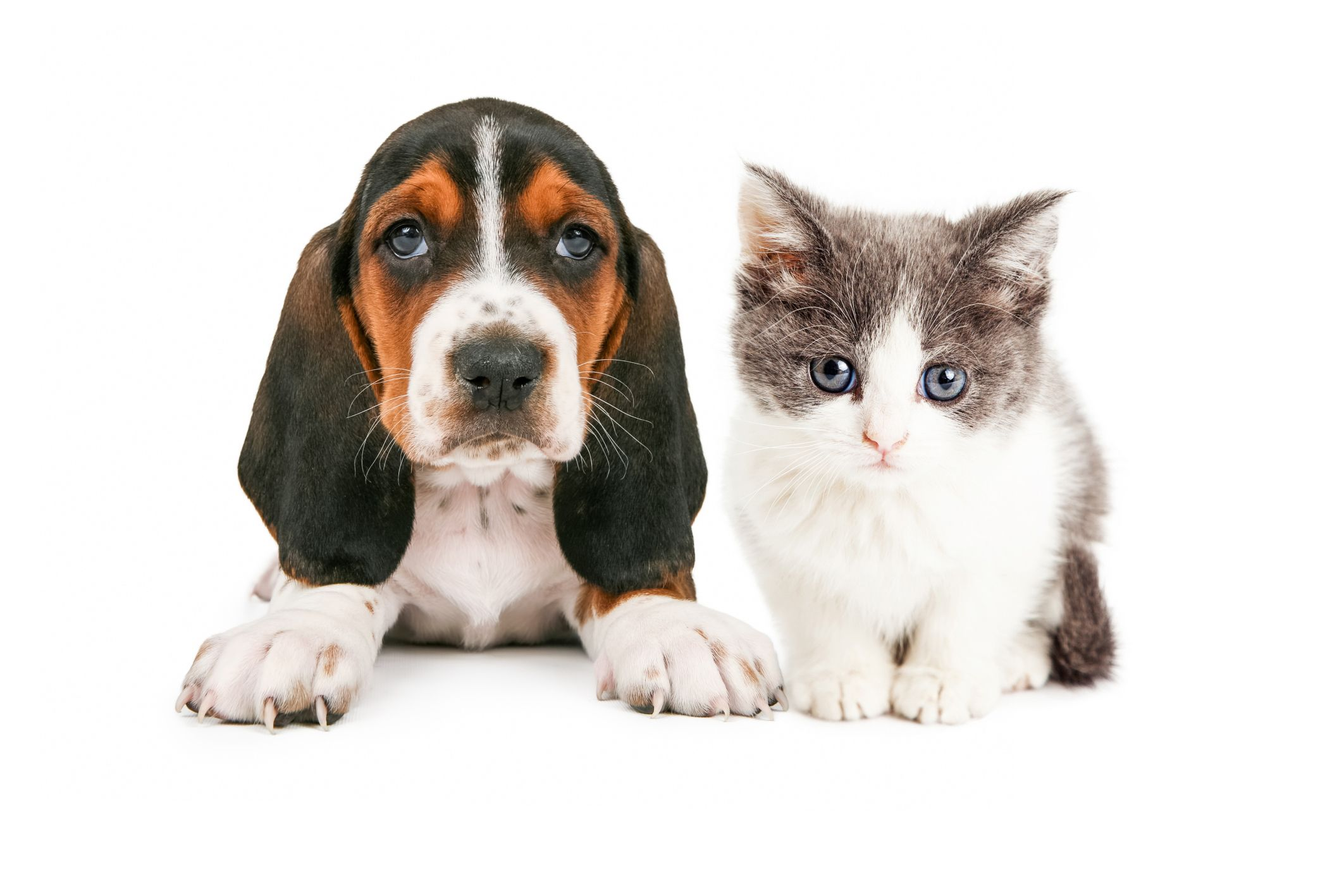 Are You Actually A Cat Person Or Dog Person? Baby cats