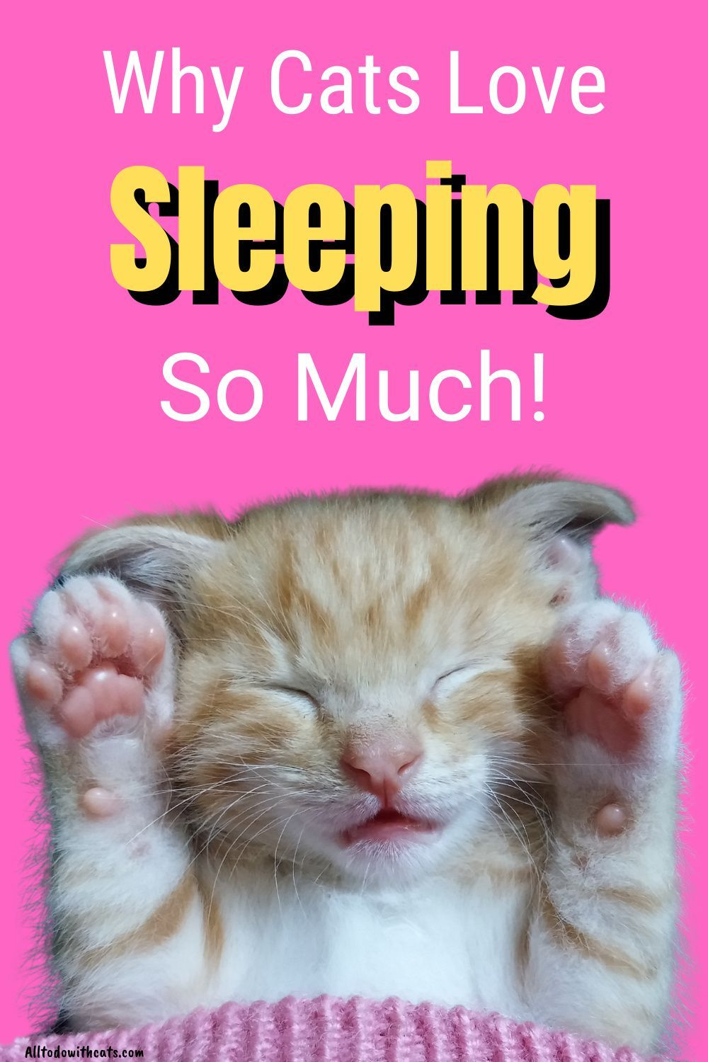 All To Do With Cats All You Need For Cat Crazy People In 2020 Cat Parenting Cats Cat Facts