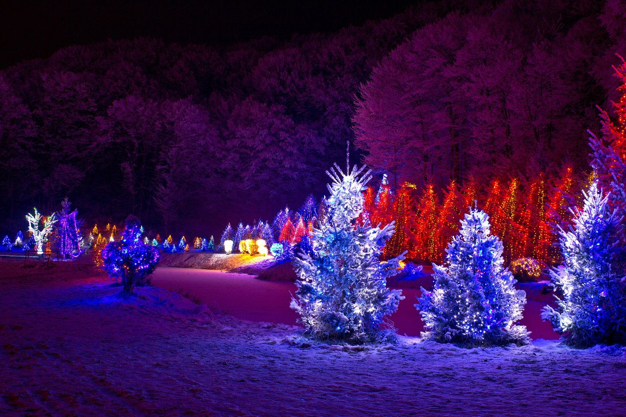outdoor christmas lights christmas lights decorate your outside christmas trees and walkway