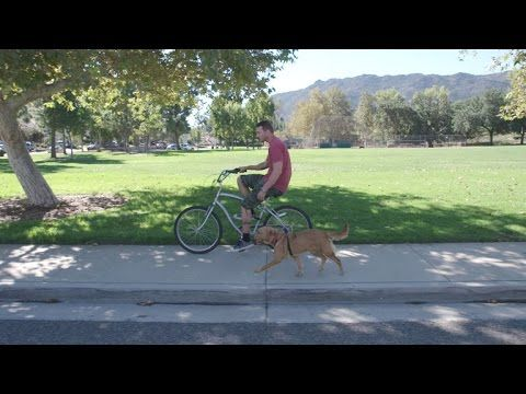 Lucky Dog - A Dog and a Bike