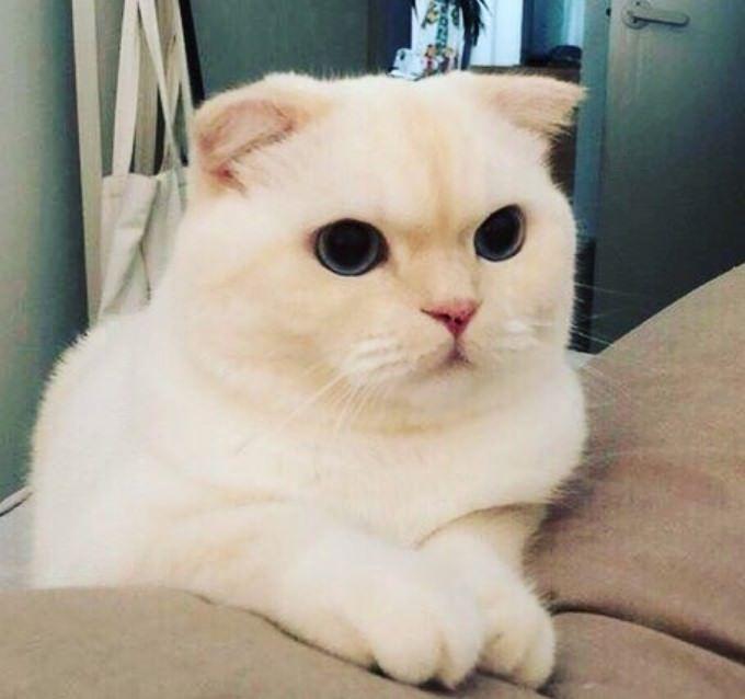 200+ Fancy Cat Names | Cats | Cat names, Cats, Fancy cats