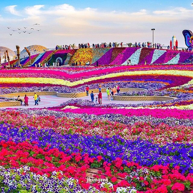 Dubai Miracle Garden U.A.E ️ Picture by JhimGreg