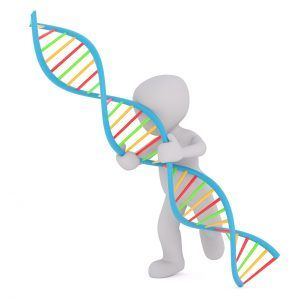 Things to Know About DNA|  National DNA Day was April 25. Genealogy and genetics have become intertwined over the years. Today, genealogists are as likely to use online genealogy resources as they are to order a DNA test in an effort to learn more about their family tree.   Here are some interesting things to know about DNA.  #DNA #DNAday17 #genes #genealogy #familytree #ancestors