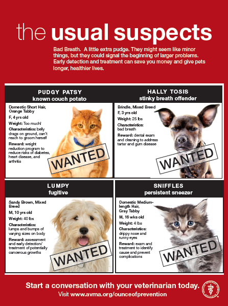 WANTED! Pets, Preventative health, Feline health