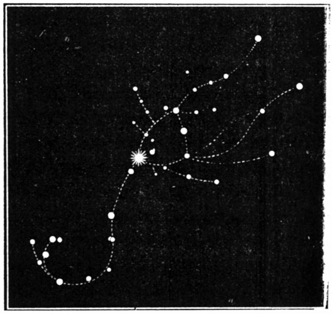 Scorpius Constellation Tattoo The Scorpio Constellation Body Art