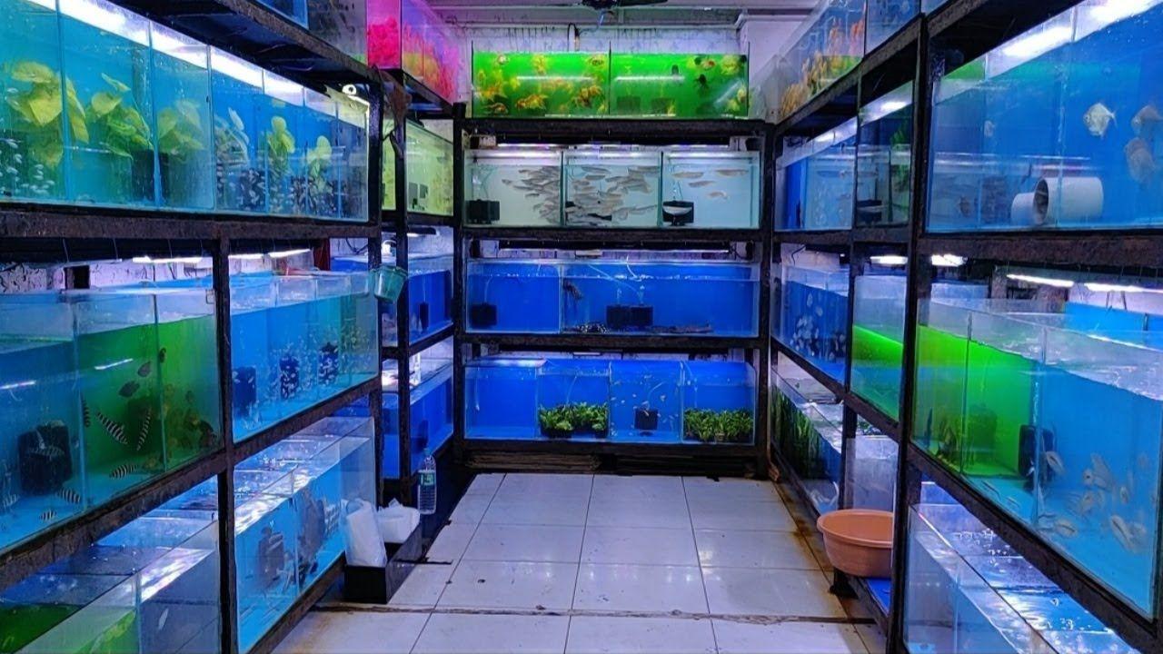 Aquariums Aqua Planet Aquarium Fish Shop In 2020 Aquarium Fish Aquarium Black Koi Fish