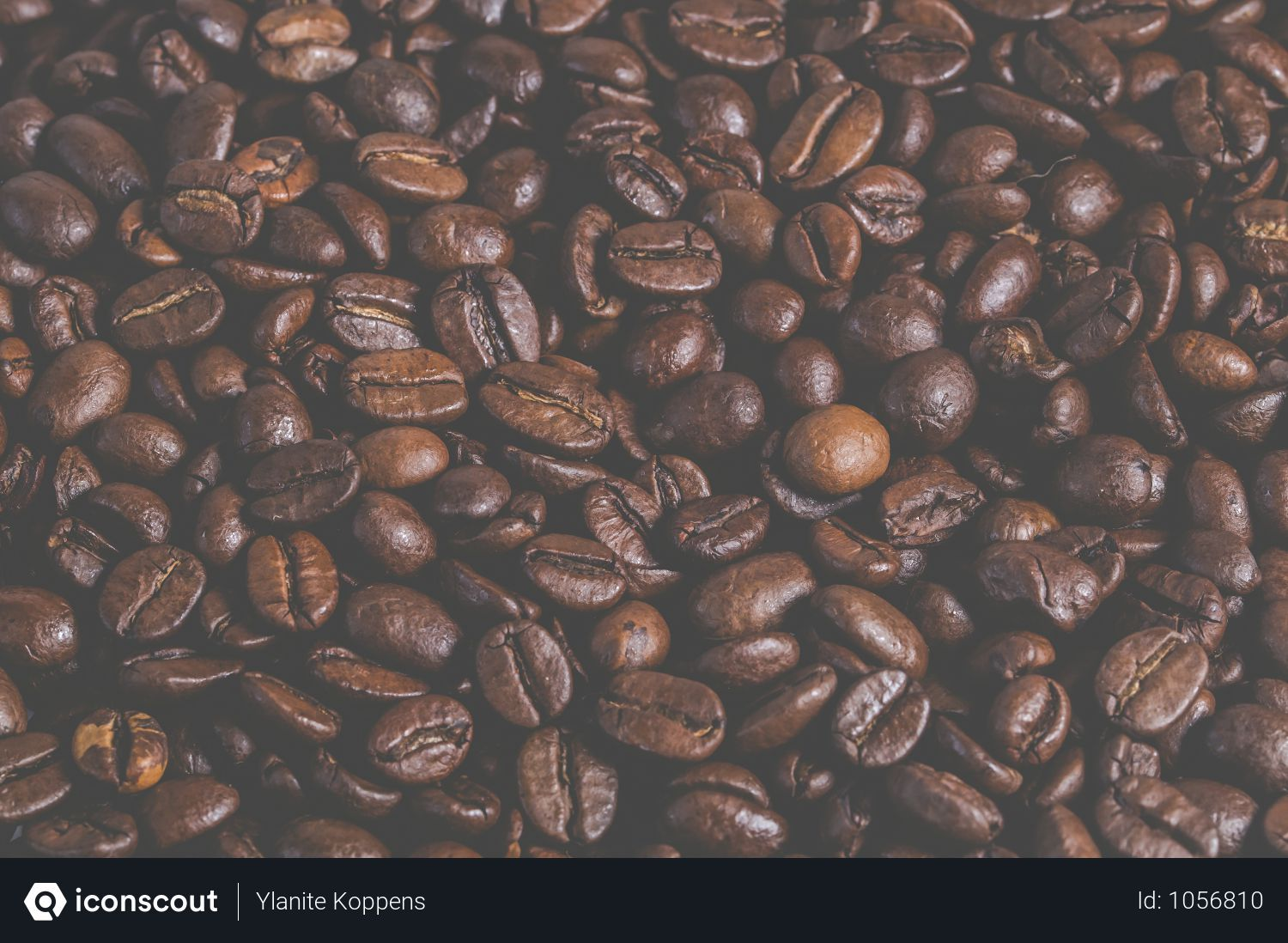 Free Coffee Beans Photo Download In Png Jpg Format Enjoy Coffee Coffee Around The World Free Coffee