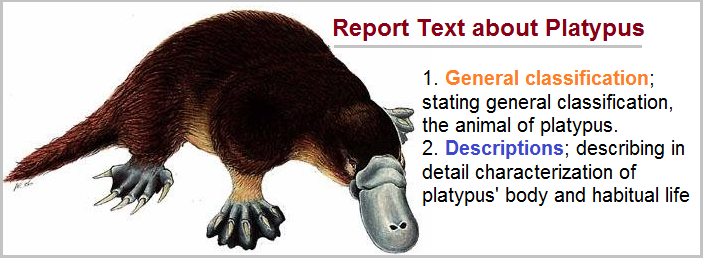 example of report text about animal platypus
