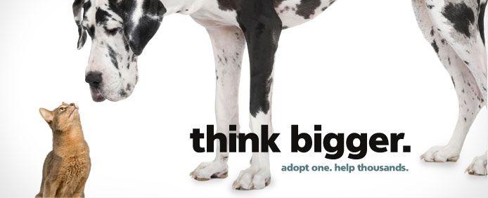 Utah Humane Society Animal Adoptions Pet Adoption Animal Shelter Humane Society