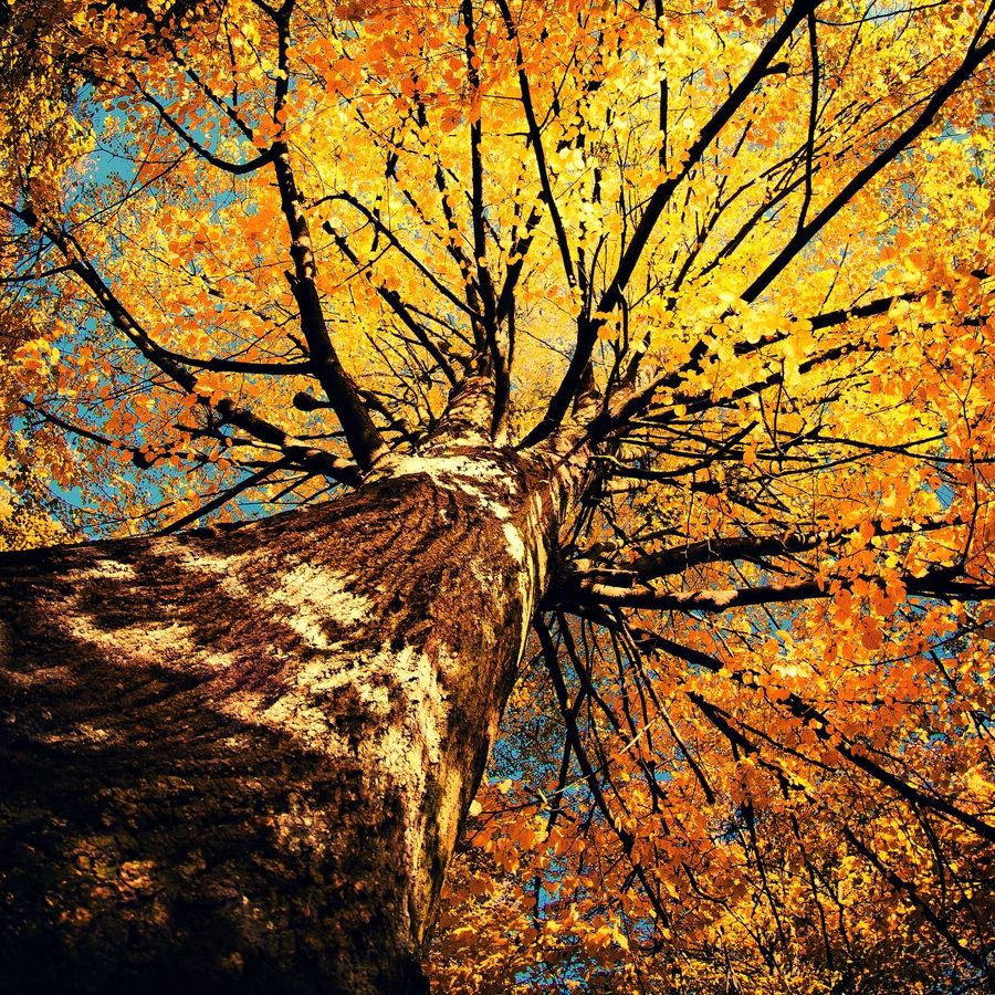"500px / Photo ""a tree"" by Adam Sandurski"