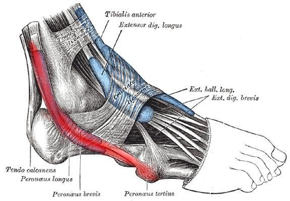 The Pain On The Outside Of Your Ankle Or Foot Could Be Caused By