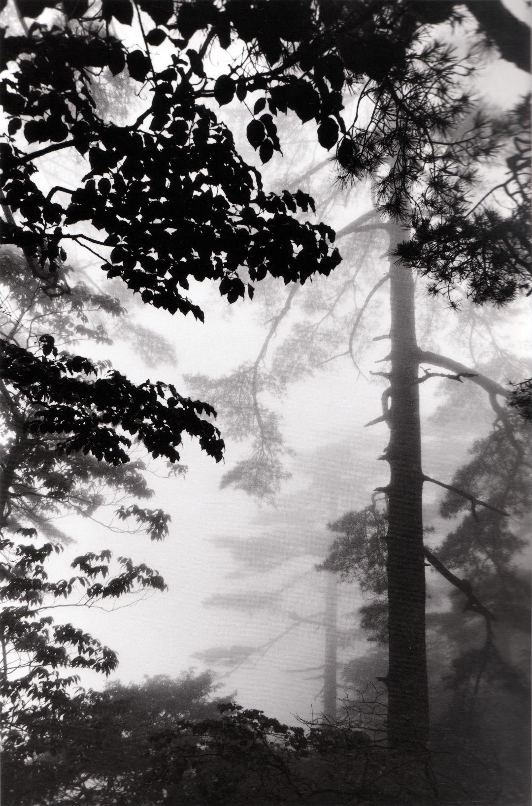 Wang Wusheng. Pine forest in mist, taken at Stone Bamboo Shot Bridge, June 2004, 4 PM