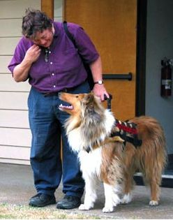 5 Collies Who Are Real Life Lassies American Kennel Club