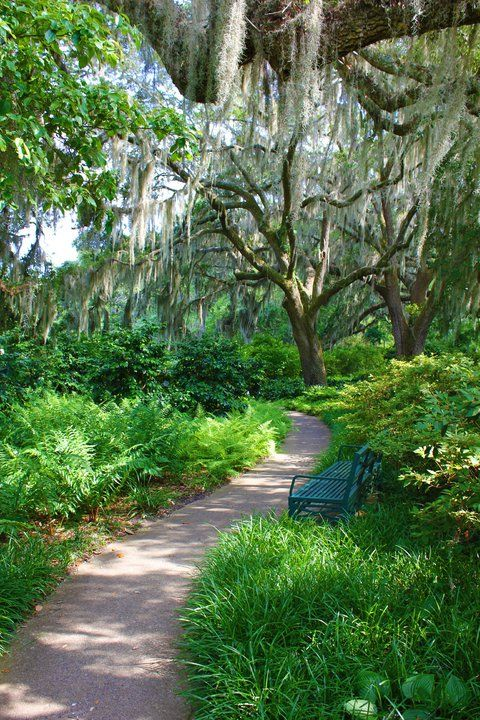 Moss Hanging From The Trees Along The Beautiful Pathways Of Brookgreen  Gardens, In Murrells Inlet