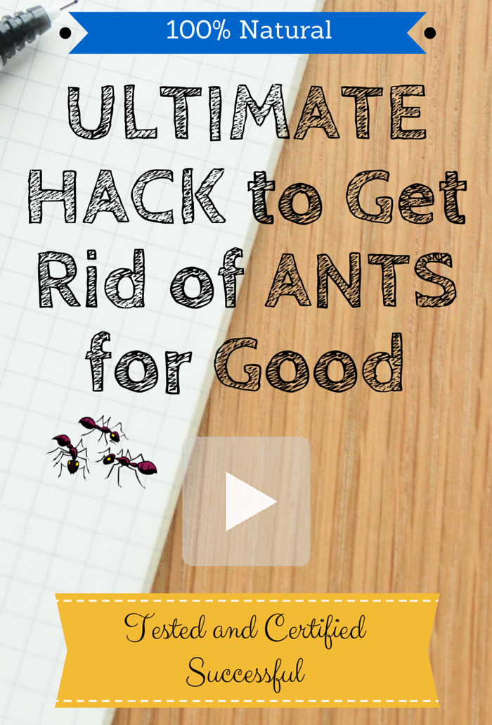 Brilliant way to get rid of ants for good with an all-natural ant repellent. This worked like a charm! #ants #naturalantrepellent