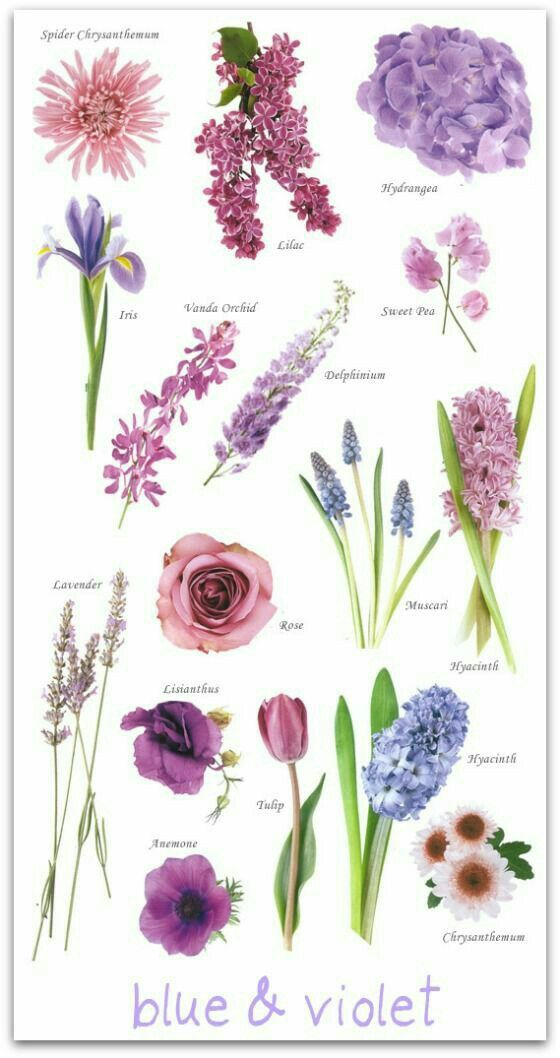 Names Of Flowers Types Purple Flower Lilac Wedding