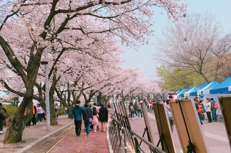 1 Yeouido Park Asia Travel South Korea Places