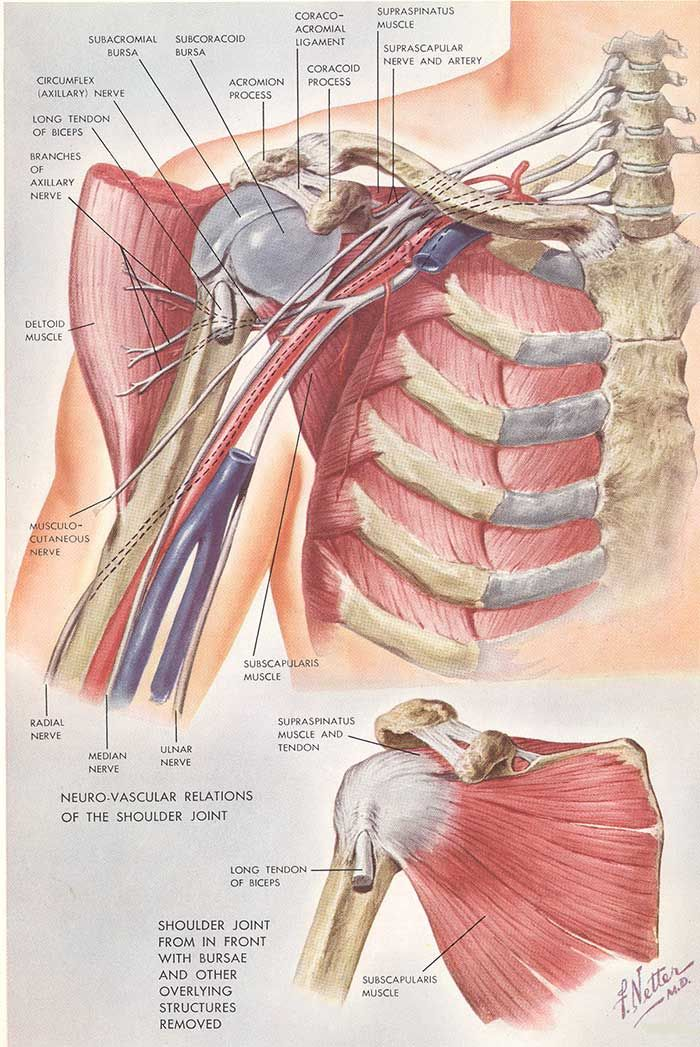 Related image   Health: Reverse Shoulder Total Replacement ...