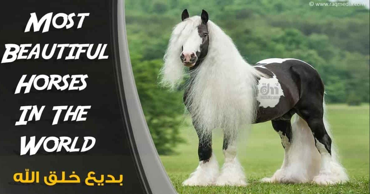 Most Beautiful And Rare Horses In The World Rare Horses Horses Most Beautiful Horses