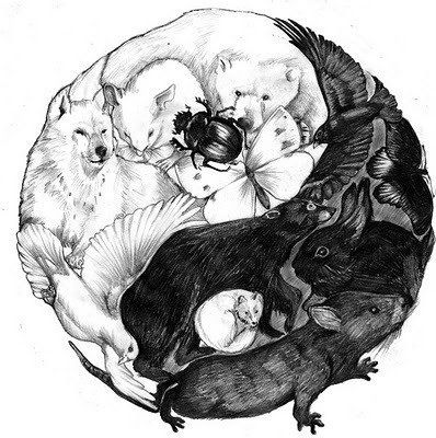 Creative Ying Yang Symbol With Wolves Rats Rodents Birds And Bugs