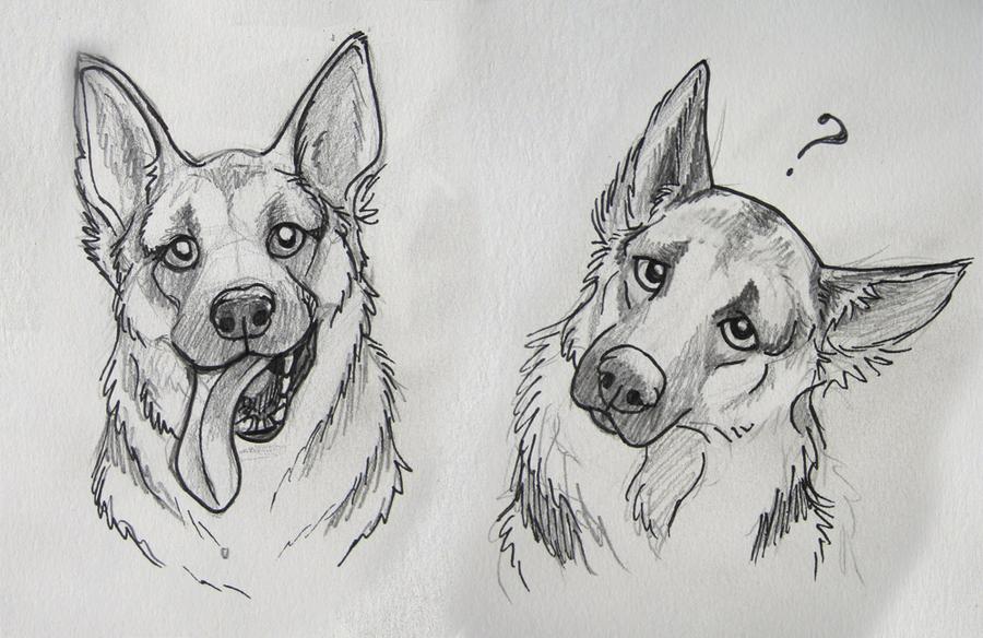 German Shepard sketches by Reenama.deviantart.com on @DeviantArt ...