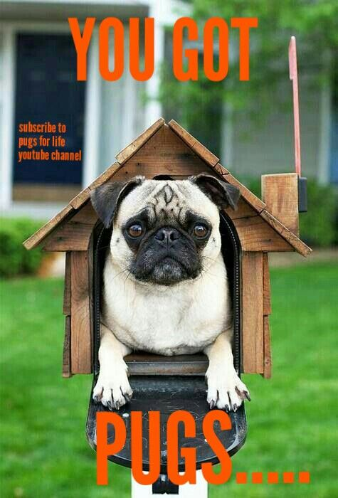 Have A Great Day Friends Pugs Dogs Retweet Pug Follow Like