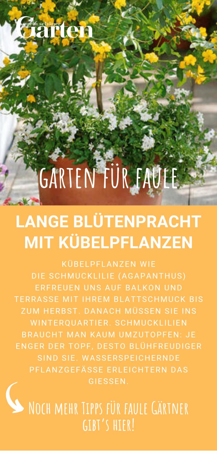 Garten Fur Faule Lange Blutenpracht Mit Kubelpflanzen Kubelpflanzen Pflanzen Garten
