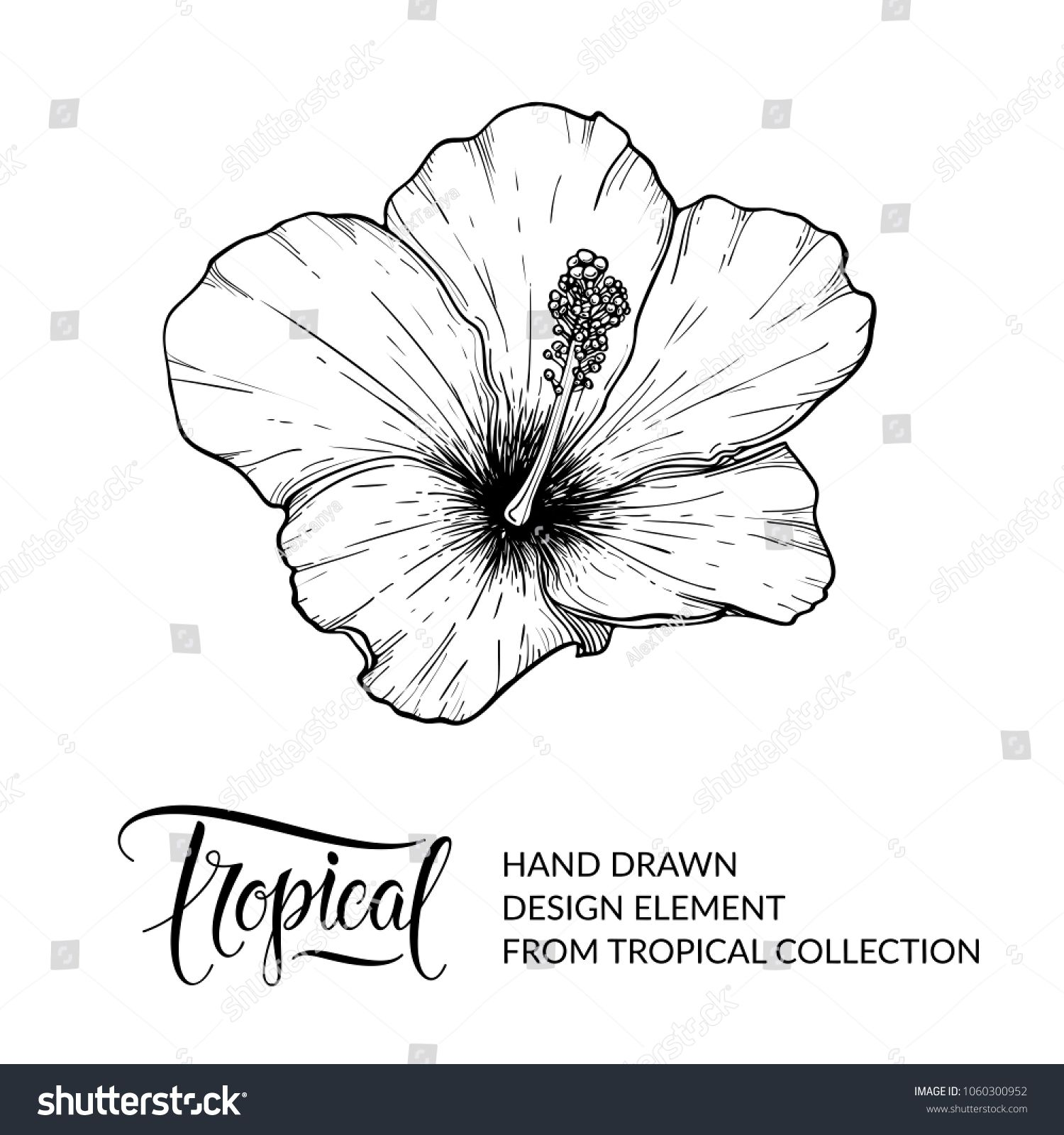 Hibiscus tropical flower isolated exotic floral design element for tropical flower isolated exotic floral design element for hibiscus tea packaging hawaiian flower black and white graphic sketch nature and plant izmirmasajfo