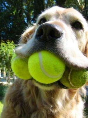 3 tennis balls! In yo face